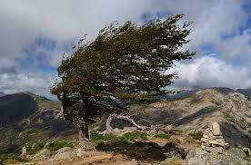 wind storm1